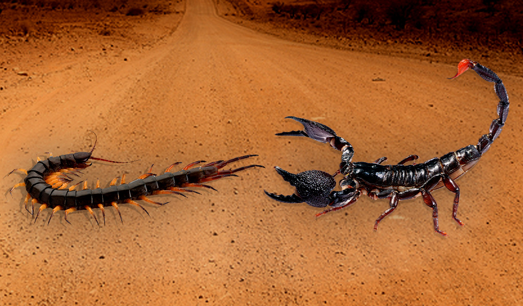 Centipede vs Scorpion
